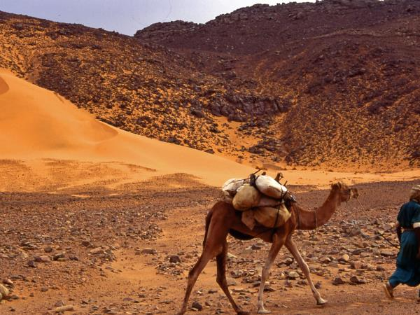 Algeria holidays, Desert and History
