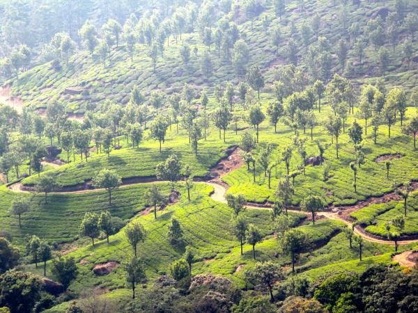 Kerala & Mumbai luxury holiday