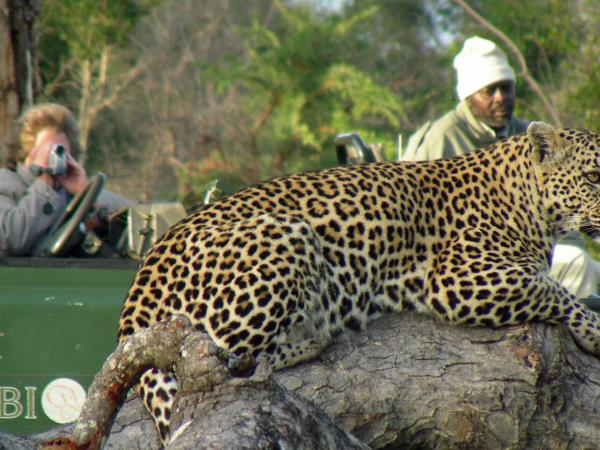 South Africa luxury wildlife adventure
