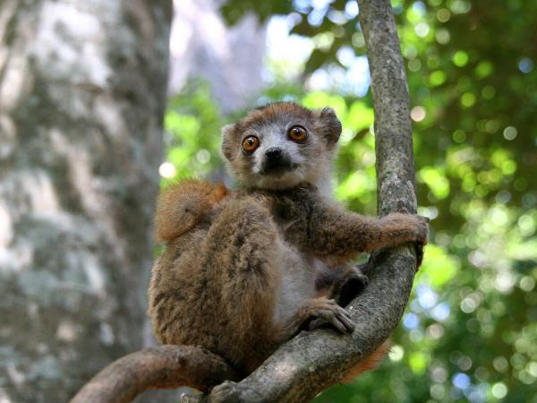 Madagascar in depth, small group tour
