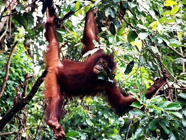 Borneo holiday, Land below the wind
