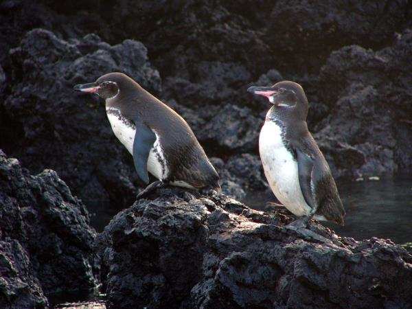 Galapagos family adventure holiday