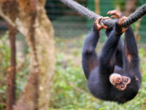 Sierra Leone holiday, Forts, Chimps and Beaches