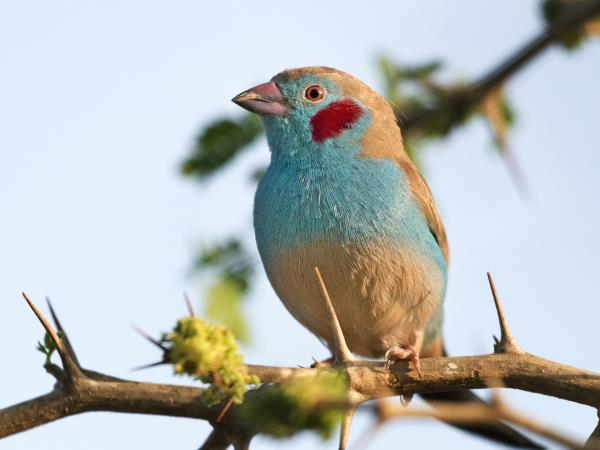 Gambia bird watching tours