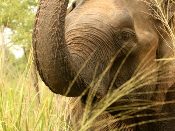 Elephant conservation holiday in Sri Lanka