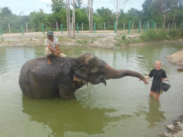 Elephant refuge volunteering in Thailand