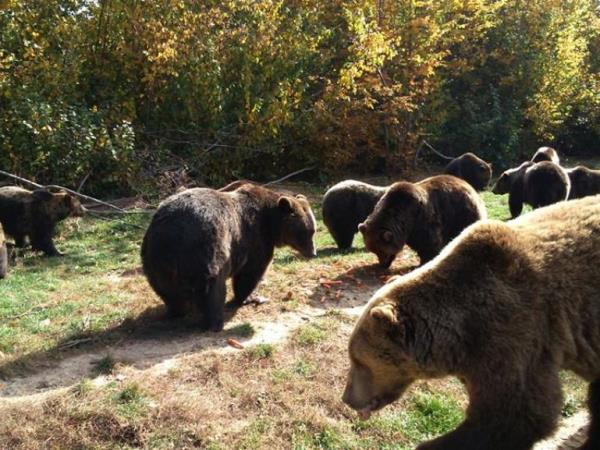 Family volunteering with bears in Romania