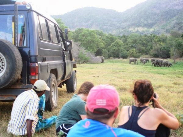 Family volunteering with elephants in Sri Lanka