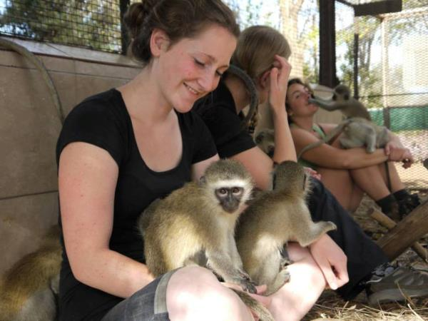 Family volunteering with monkeys in South Africa