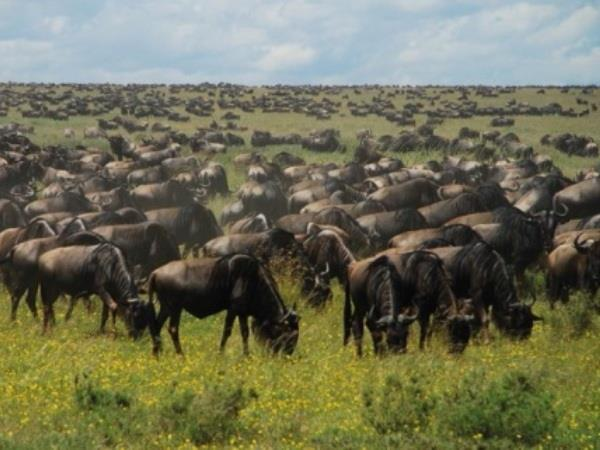Kenya & Tanzania holiday, East Africa highlights