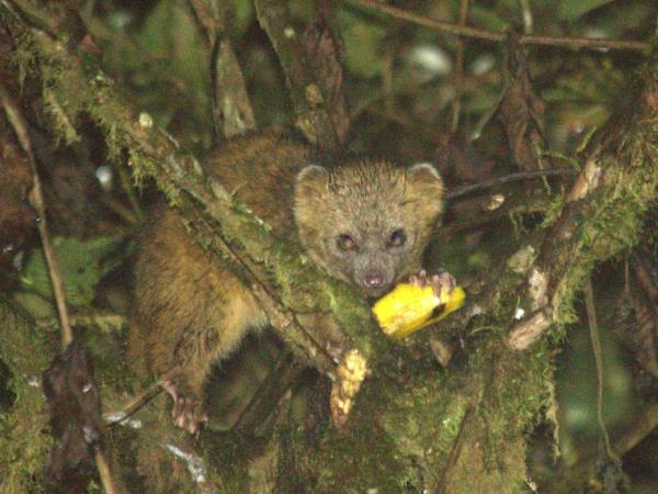 Ecuador wildlife tours