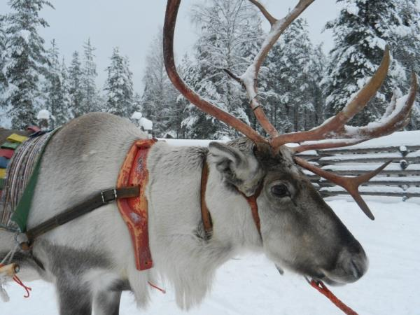 Family winter holiday to Lapland, Finland