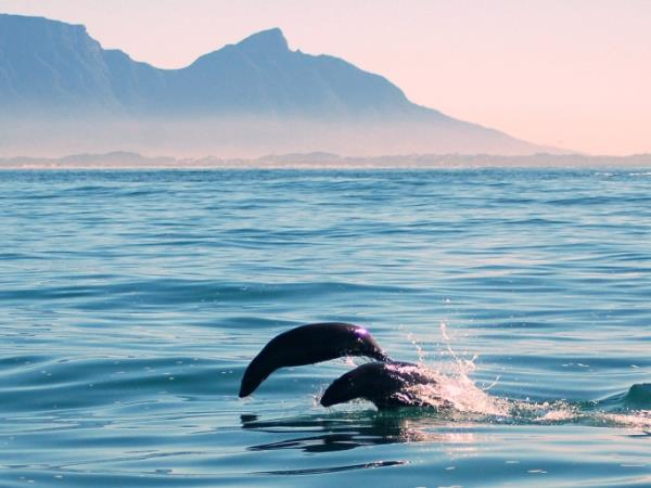 Western Cape wildlife holiday in South Africa