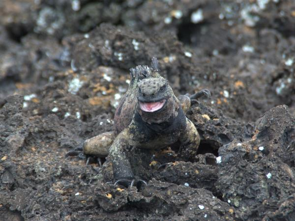 Galapagos adventure holiday