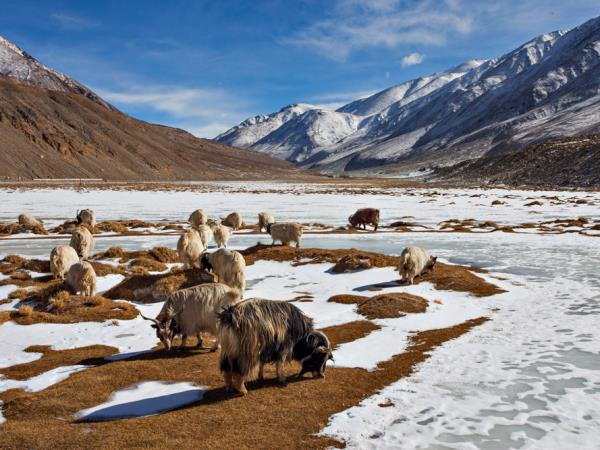 Kashmir and Ladakh holiday, India
