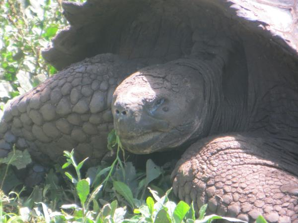 Galapagos family holiday, hotel based