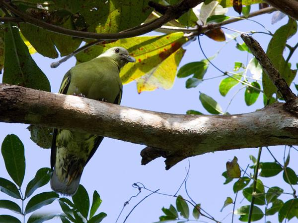 Andaman Islands bird watching holiday