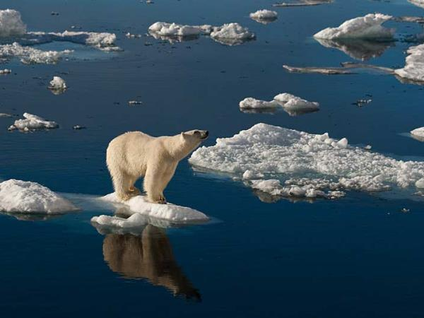 Spitsbergen Arctic cruise with Mark Carwardine