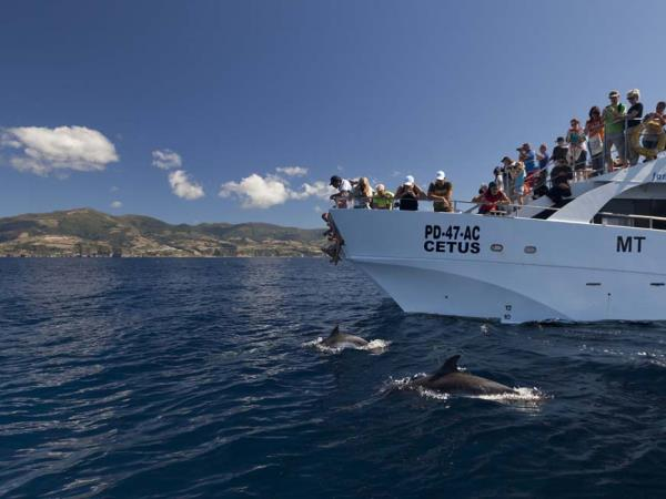 Family whale & dolphin watching holiday, Azores