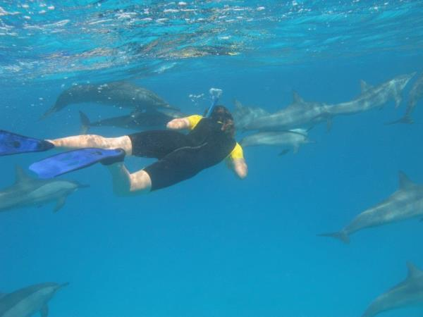 Family swimming with dolphins in the Azores