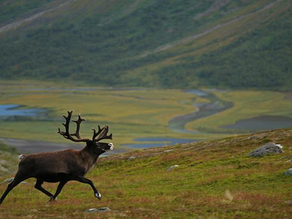 Sweden wildlife holiday, Moose expedition