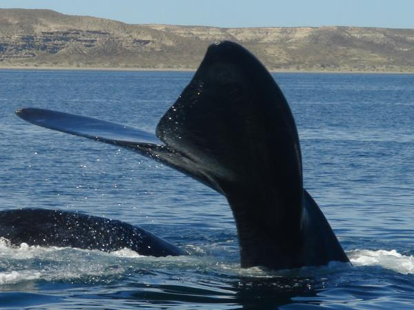 Patagonia wildlife & cultural holiday, tailor made