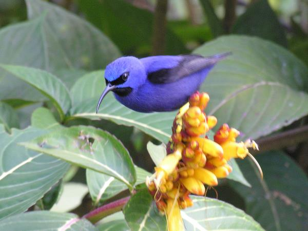 Birdwatching in Trinidad & Tobago, small group tour