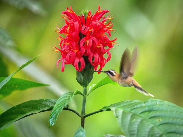 Trinidad and Tobago nature tours