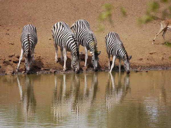 Zululand safari holiday, South Africa