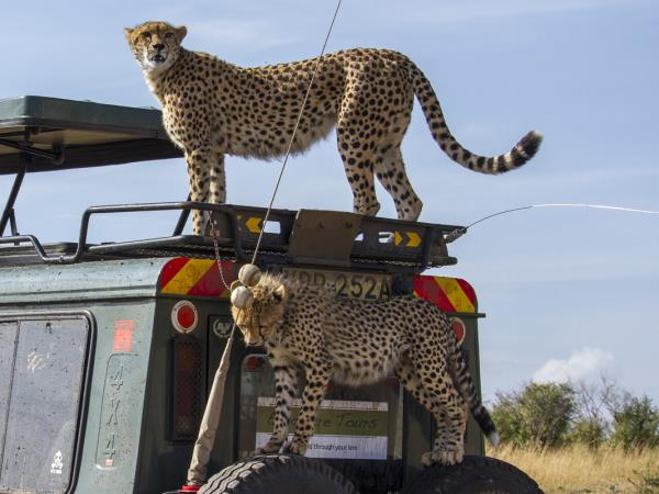 Luxury photography safari in Kenya