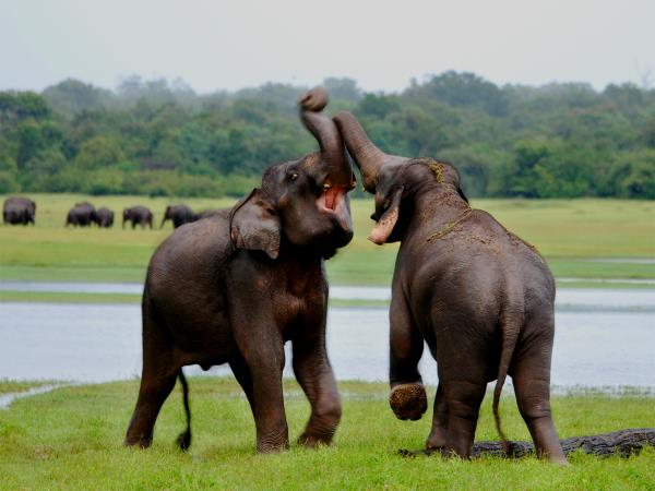 Sri Lanka family adventure holiday