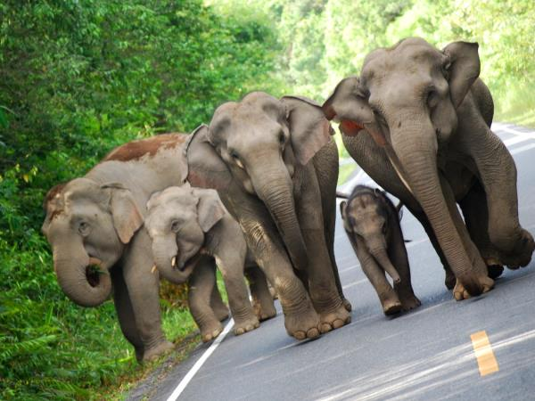 Thailand tailor made holiday, elephants, jungle & beach