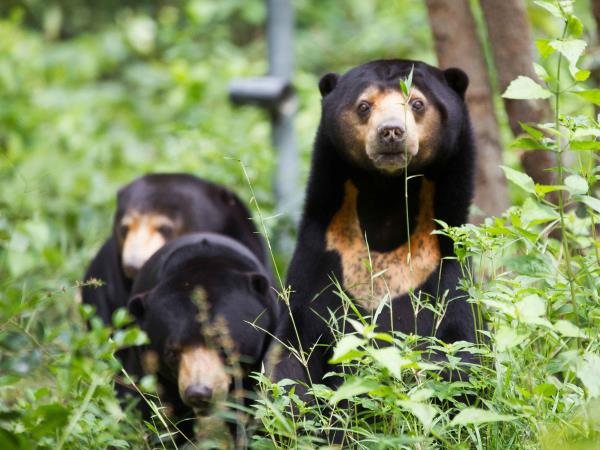 Volunteering with bears in Cambodia