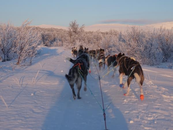Northern Lights and dog sledding holiday, Norway