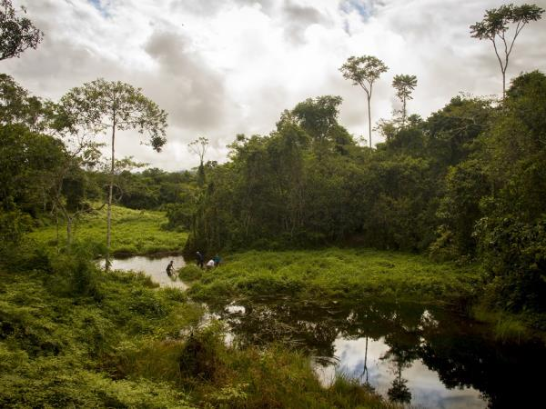 Conservation volunteering in the Amazon, Peru