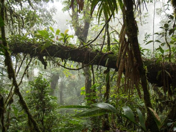 Manu Biosphere Reserve adventure in the Amazon, Peru