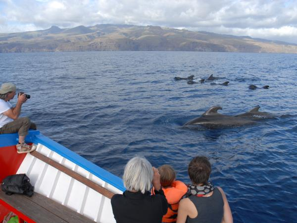 Whale and dolphin watching in La Gomera