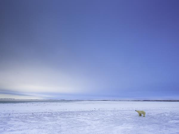 Polar Bear watching in Canada