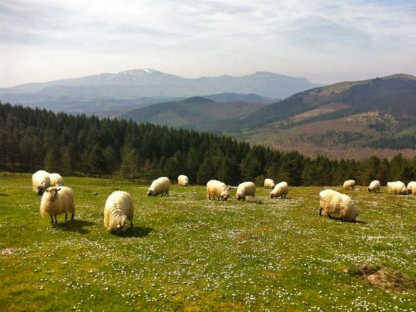 Basque Coast self-guided walking & gastronomy holiday