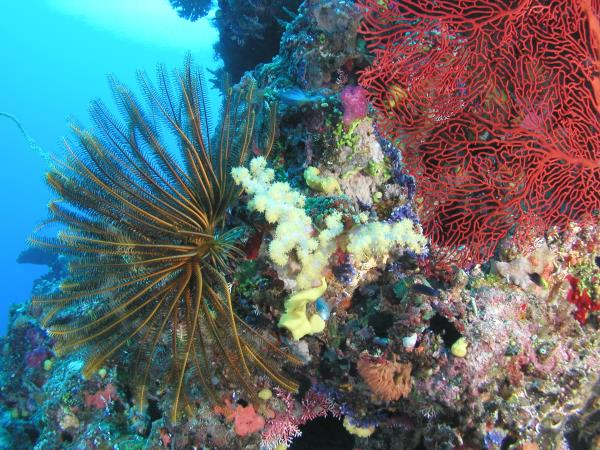 Diving holiday in Fiji