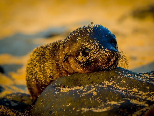Peru and Galapagos Islands holiday, culture and wildlife