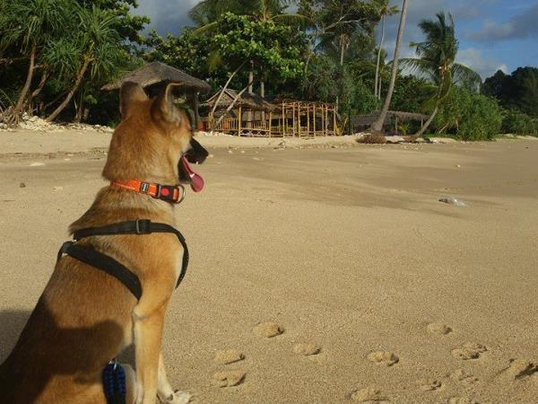Volunteer with rescue dogs and cats in Thailand