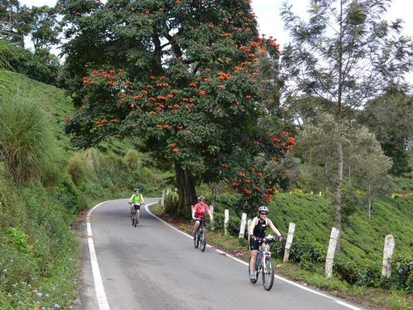 Southern India cycling holiday, tailor made