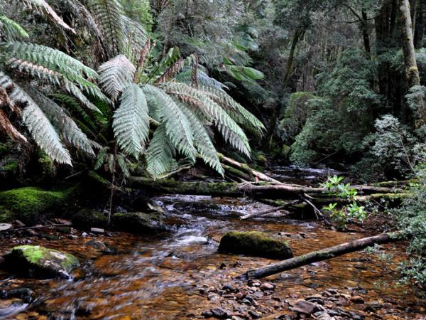 Tasmania East Coast to Cradle Mountain tour, 5 days