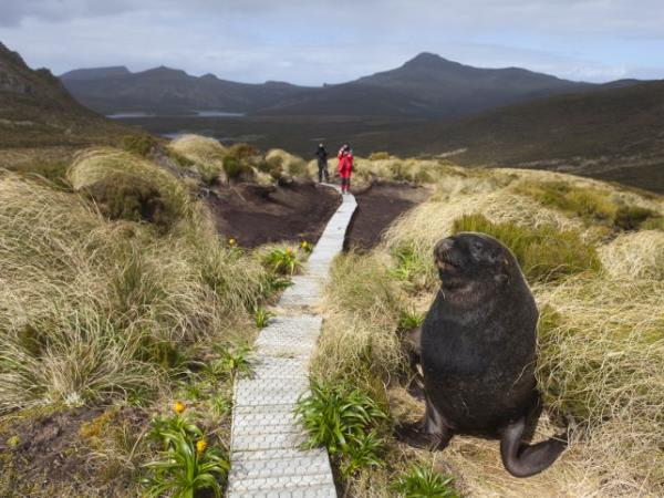 Wildlife Cruise of New Zealand Subantarctic Islands