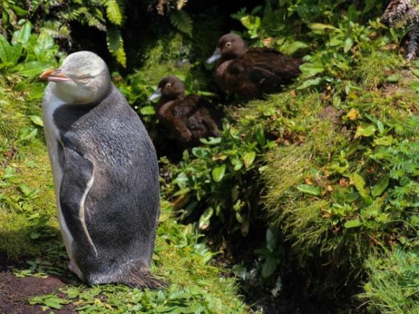 New Zealands Subantarctic Islands cruise, including Macquarie