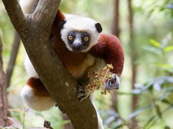 Madagascar trekking holiday