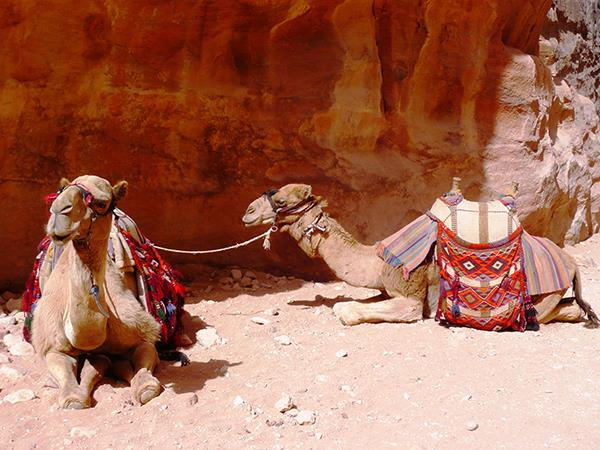 Tailor made holidays to Jordan