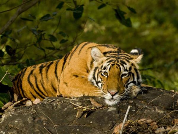 Central India holiday, tigers and jungles