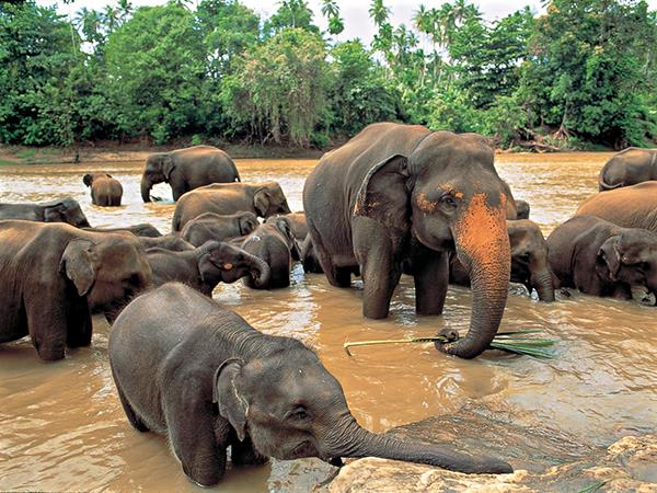 Sri Lanka holiday, wild escapes